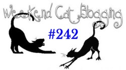 Weekend Cat Blogging Banner