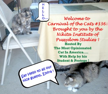 Carnival_ofcats336