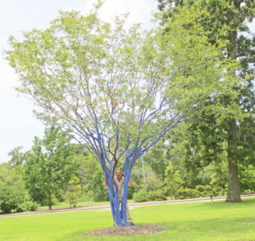 Houston_BlueTrees1