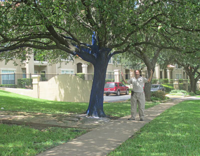 Houston_BlueTrees2