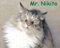 Nikita-cat-senior-2010