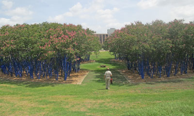 Houston_BlueTrees3
