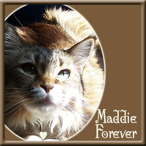 Maddie,-Forever