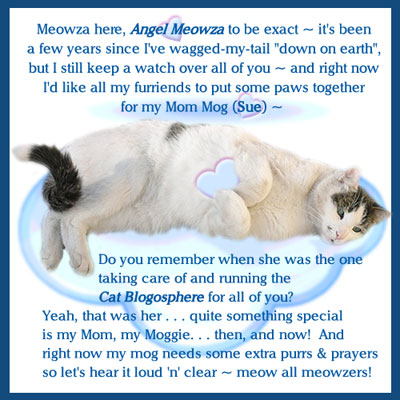 Purrs-and-Prayers-for-MOG