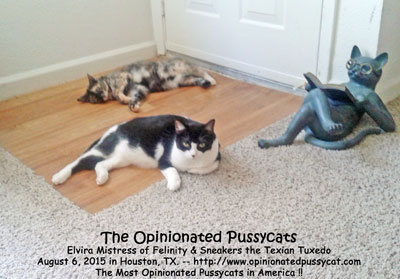 OpinionatedPussycats_August2015